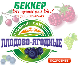 Покупка саженцев: секреты продавцов плодовых культур