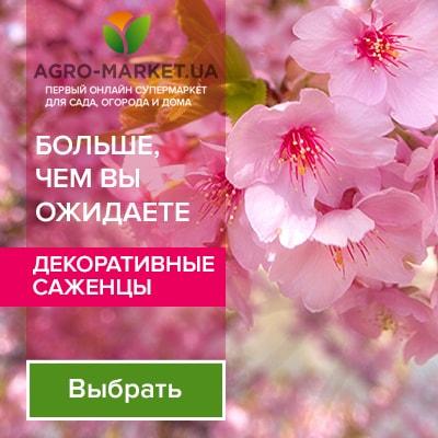 Agromarket UA