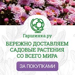 Garshinka